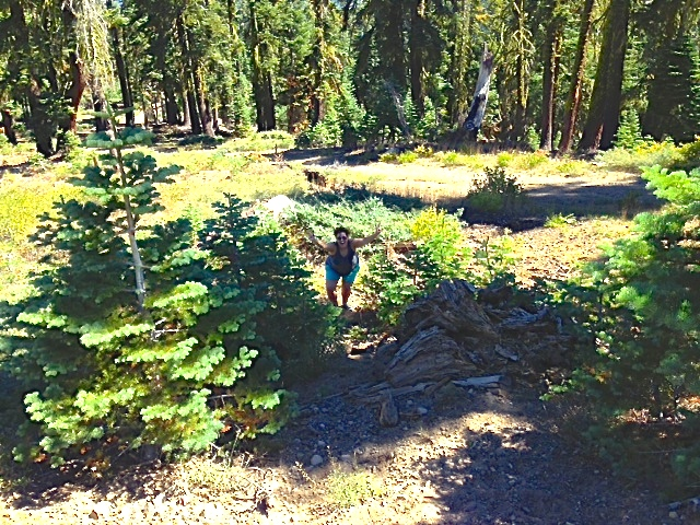Wandering around El Dorado Forest, age 29. (Photo cred: Robin M.)